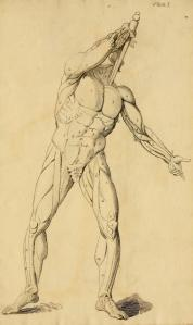 James Birch Sharpe's Elements of anatomy : designed for the use of students in the fine arts (1818)